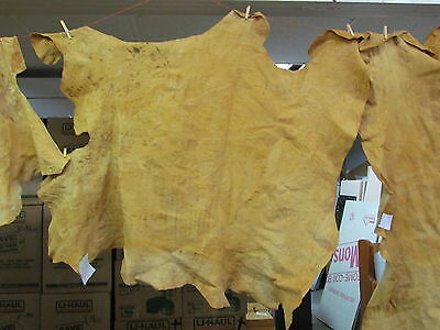"""Native American Light Colored Home Tanned Moose Hide 52"""" X 49"""" Irregular Shaped"""