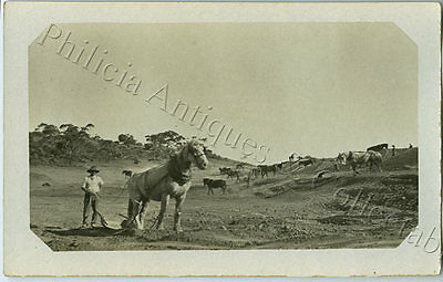 1918 Rp Npu Postcard Workhorses At Kultanaby Reservoir E/w Railway Building A71.