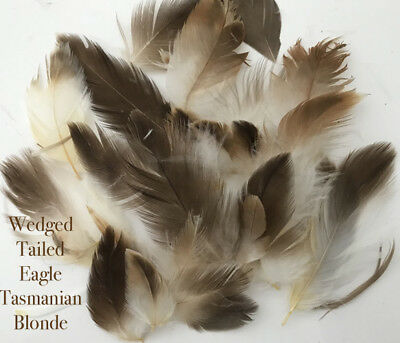 Wedge Tailed Eagle  Real Feathers  - X 20 Pieces - Limited Stocks - Australian