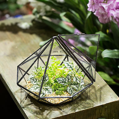Diamond Glass Geometric Terrarium Succulent Fern Moss Tabletop Terrarium Box
