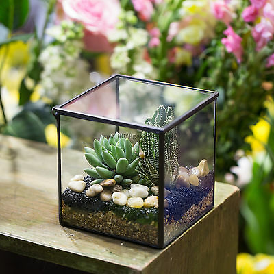 Square Glass Geometric Terrarium Tabletop Succulent Plant Terrarium Box Planter