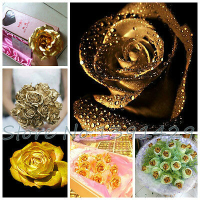 50pcs  Rose Seeds Charming Supreme Seeds home Garden decor (Champagne color)