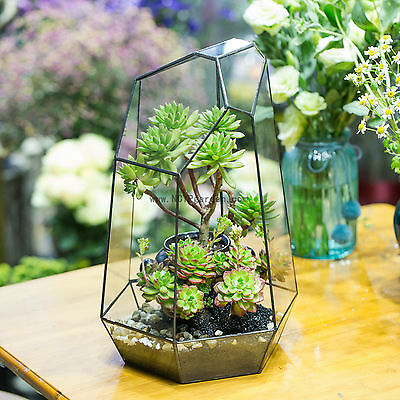 Irregular Glass Geometric Terrarium Box Tabletop Succulent Plant Planter Fern
