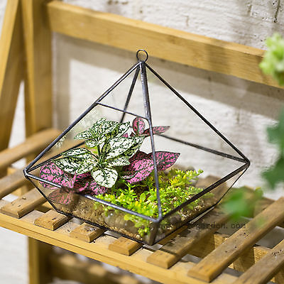 Vertebral Metal Glass Geometric Terrarium Tabletop Succulent Planter Box Pot