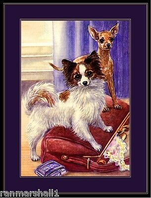 English Print Papillon Chihuahua Dog Art Picture