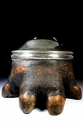 Rare Large Taxidermy Chester Silver Hippopotamus Foot Lidded Caddy Box C.1911