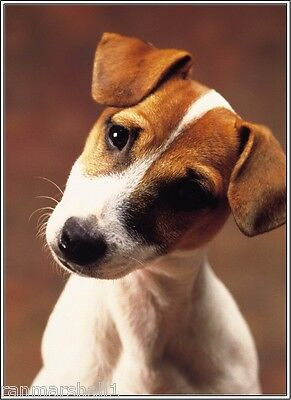 Set of 4 Puppy Dog Jack Russell Terrier Stationery Greeting Notecards /Envelopes