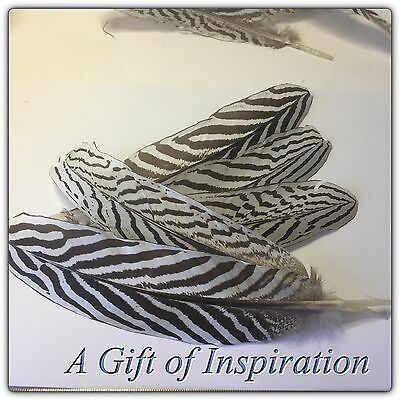 5 x 17-23cm Silver Pheasant Feathers DIY Art Craft Millinery Vase Home decor