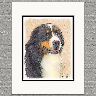 Bernese Mountain Dog Original 8x10 Art Print Matted to 11x14