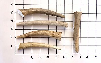 Deer & Elk Antler Chews - Five (5) Piece antler treat for small dogs dog bones