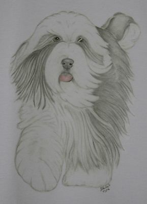 Bearded Collie T-Shirt Unique drawn design sizes 3-6 mth - XXL FREE P&P