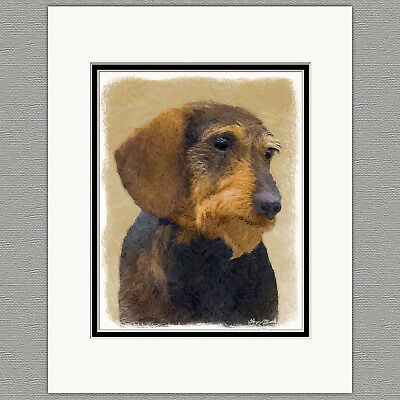 Dachshund Wirehaired Black and Tan Original Art Print 8x10 Matted to 11x14