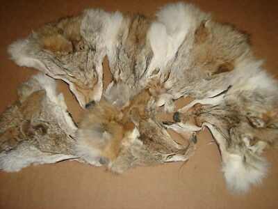Lot of 6 Tanned Coyote Faces #2 quality/Fur/Crafts/Real Coyote fur