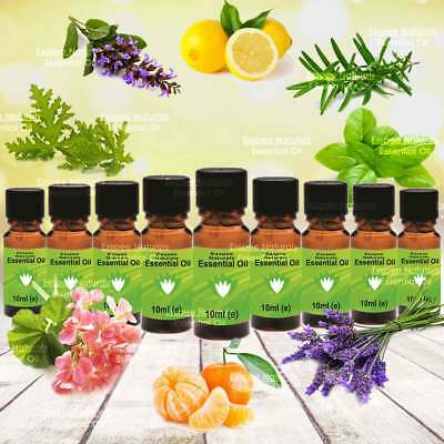 ESSENTIAL OILS - 9x10ml - Popular Aromatherapy Set - 100% Pure in Glass Bottles