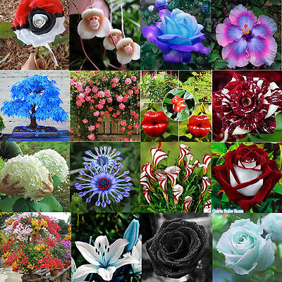 Organic Home Garden Variety Plant Fruit Magic Seeds Rainbow Rose Blue Watermelon