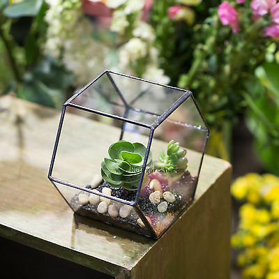 Hang Wall Mount Hexagon Glass Geometric Terrarium Planter Succulent Flower Pot