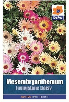2 Packs of Mesembryanthemum Livingstone Daisy Seeds, Approx 1800 Seeds Per Pack