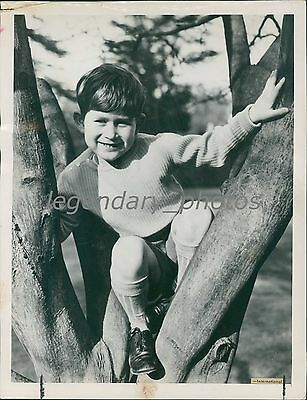 1954 Prince Charles of England in a Tree Original News Service Photo