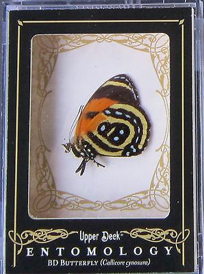 2009 Upper Deck Goodwin Champions Entomology South American BD Butterfly