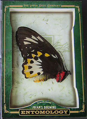 2012 Upper Deck Goodwin Champion Entomology Australian Priams Birdwing Butterfly