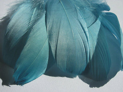 Select Goose Shoulder Feathers - Teal - Fly Tying Material