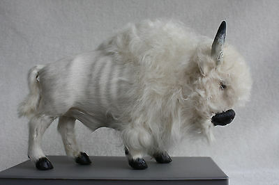 "Unique Display Buffalo White Bison Animal Resin Form w Real Goat Fur 8"" L x 5"" H"