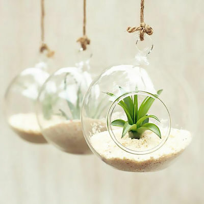 8cm Hanging Glass Flowers Plant Vase Stand Holder Terrarium Container IB