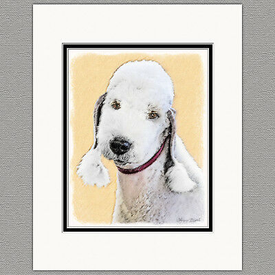 Bedlington Terrier Original Dog Art Print 8x10 Matted to 11x14