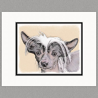 Chinese Crested Hairless Original Art Print 8x10 Matted to 11x14