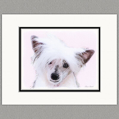 Chinese Crested Powderpuff Powder Puff Original Art Print 8x10 Matted to 11x14
