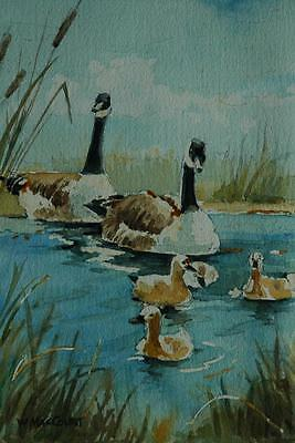 Vintage Watercolor of Pair of Canadian Geese With Goslings Signed Maccourt