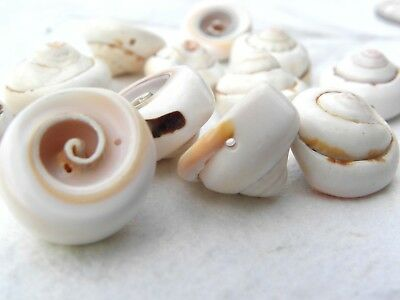 12 Mixed Swirl Chunky Pendant Beads Shells with Drilled Hole