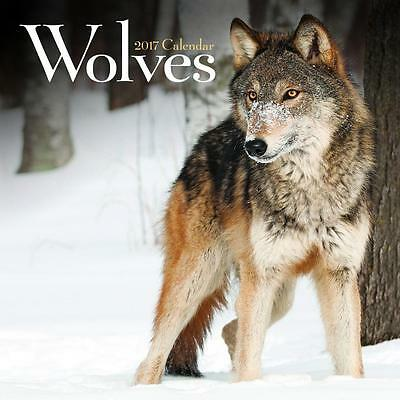 Square Wall Calendar Of Wolves Wolf 2017 + Free Uk Postage