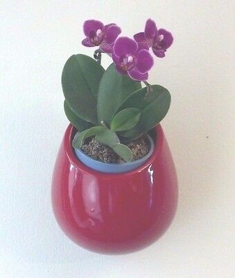 Wonderful Round Wall Planter, Ceramic, w protective liners, Red, New