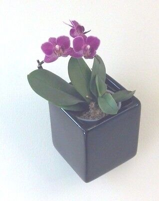 Wonderful Square Wall Planter, Ceramic, w protective liners, Black, New