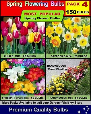 FLOWER BULBS - Daffodils/Tulips/ Freesia/ Ranunculus - 150x BULBS -PACK 4