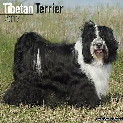 Tibetan Terriers Dog Uk Square 2017 Wall Calendar With Free Uk Postage