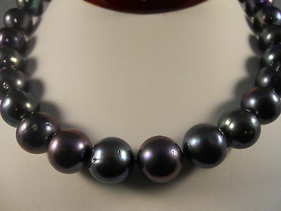 Sterling Silver, Large Size 12mm-13mm Black Freshwater Cultured Pearl Necklace