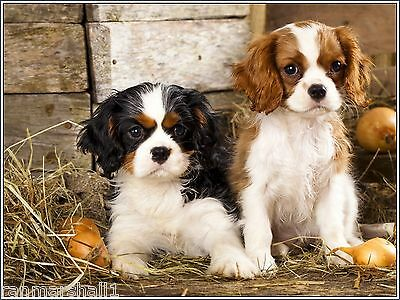 Packof4 Dog Puppy Cavalier King Charles Spaniel Greeting Notecards/ Envelopes 6