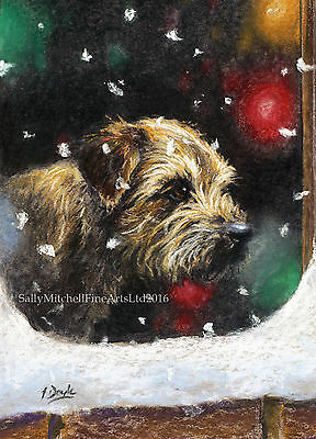 Border Terrier Dog, Christmas cards pack of 10 by Paul Doyle. C500X