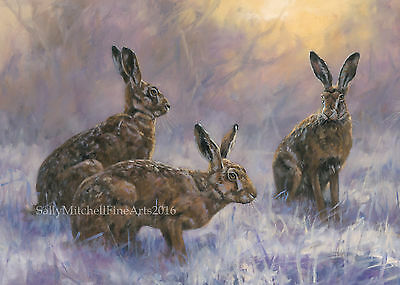 NEW Hares in the Snow, Christmas cards pack of 10 by John Trickett C496X