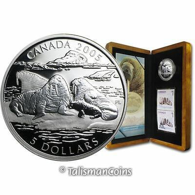 Canada 2005 Atlantic Walrus Baby Animals Coin & Stamps Set $5 Pure Silver Proof