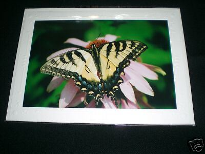 Fine Art Greeting Card Of A Yellow & Black Butterfly