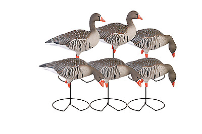 Avery Greenhead Gear Ghg Pro Fb Specklebelly Goose Decoys Harvester Pack New!