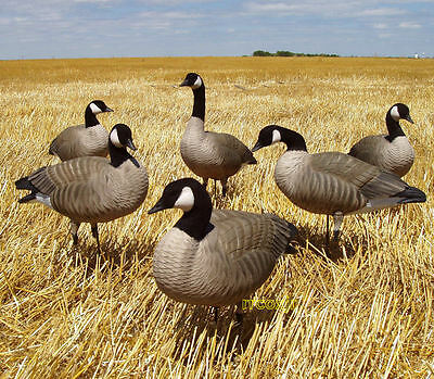Canada Goose hats online store - Avery Greenhead Gear Ghg Hot Buy Canada Goose Shell Decoys Dozen ...