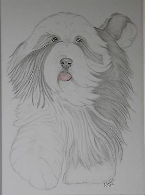 Bearded Collie. Original Drawing or Print