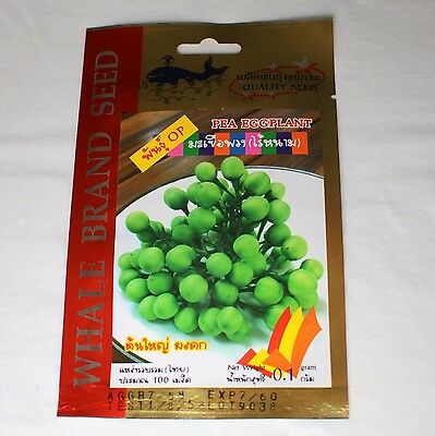 Thai Pea Eggplant / Aubergine - 100 seeds - UK Seller - Free P&P