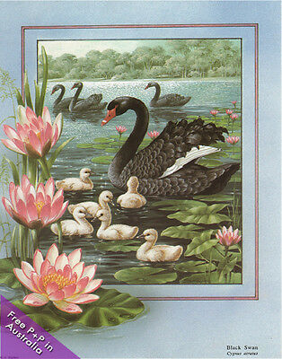 NEW Black Swan  by Shirley Barber  :  Paper Tole Kits