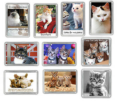 Cat Fridge Magnets - Kitten Funny Novelty Choose