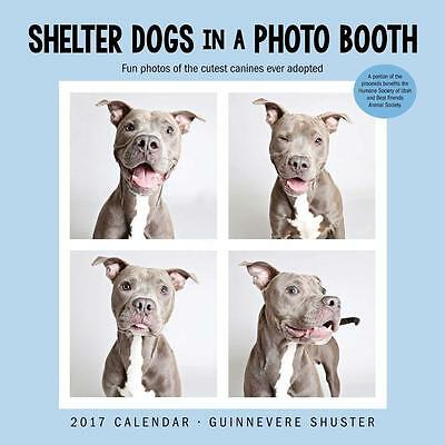 Shelter Dogs 2017 Uk Square Wall Calendar New & Sealed By Brown Trout